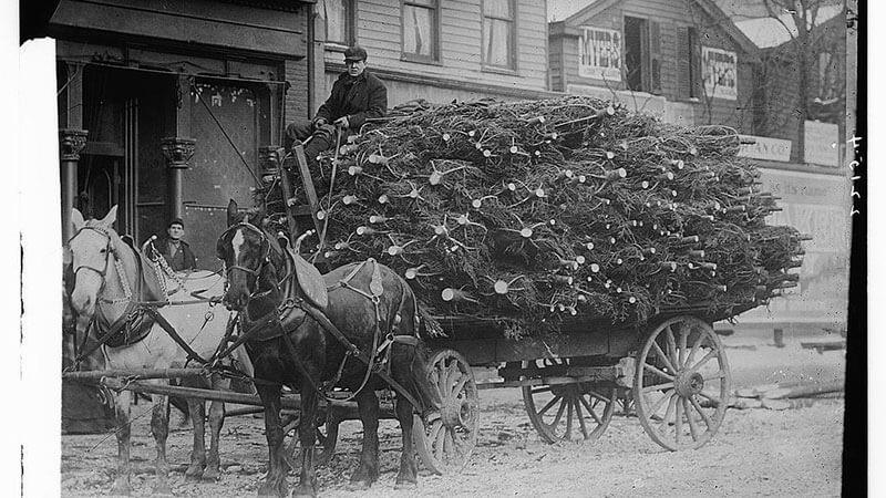 Как Марк Карр придумал продавать новогодние елки – история новогоднего бизнеса